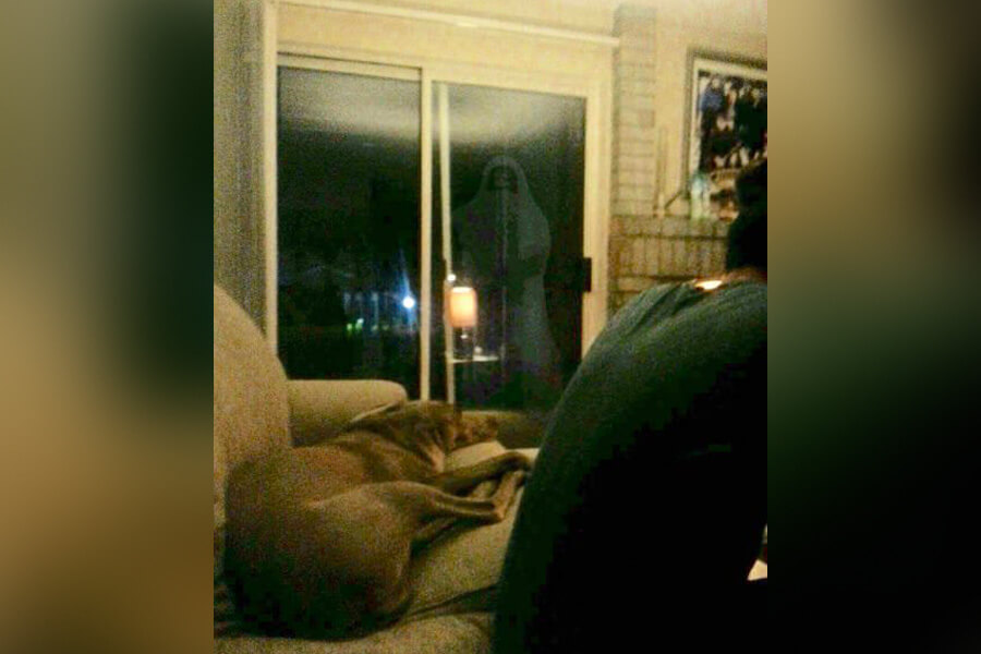 a dog not bothered by a ghost
