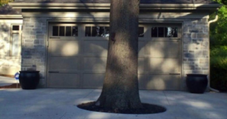 tree-1024x538