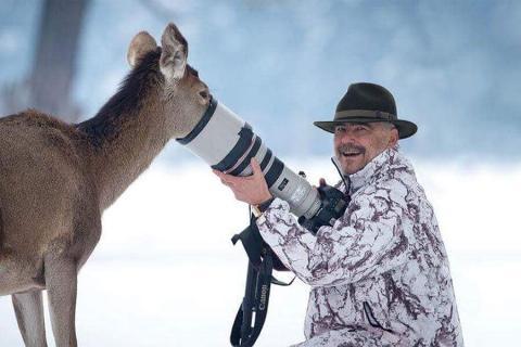 deer looks for food in camera