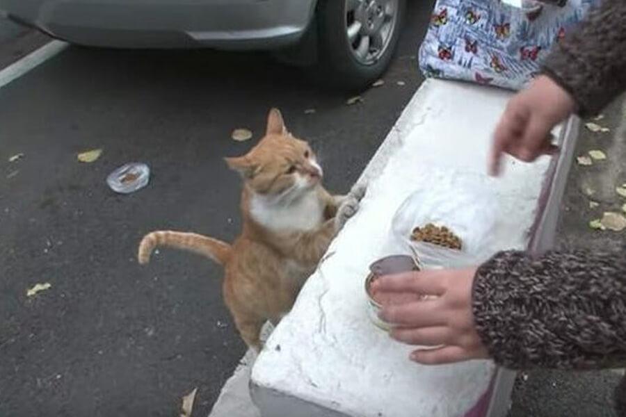 dongsuk investigates food
