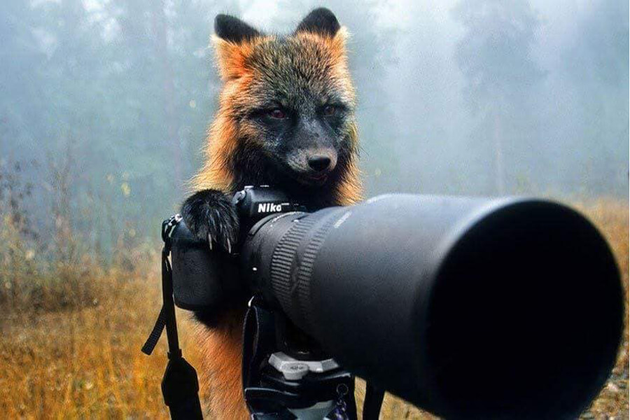 fox becomes photographer