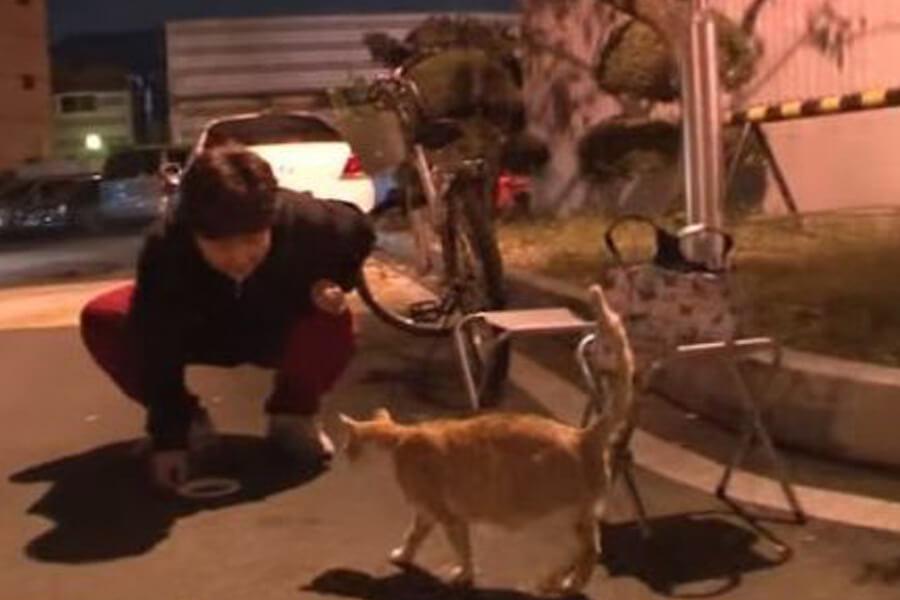 korean volunteer feeds feral cats