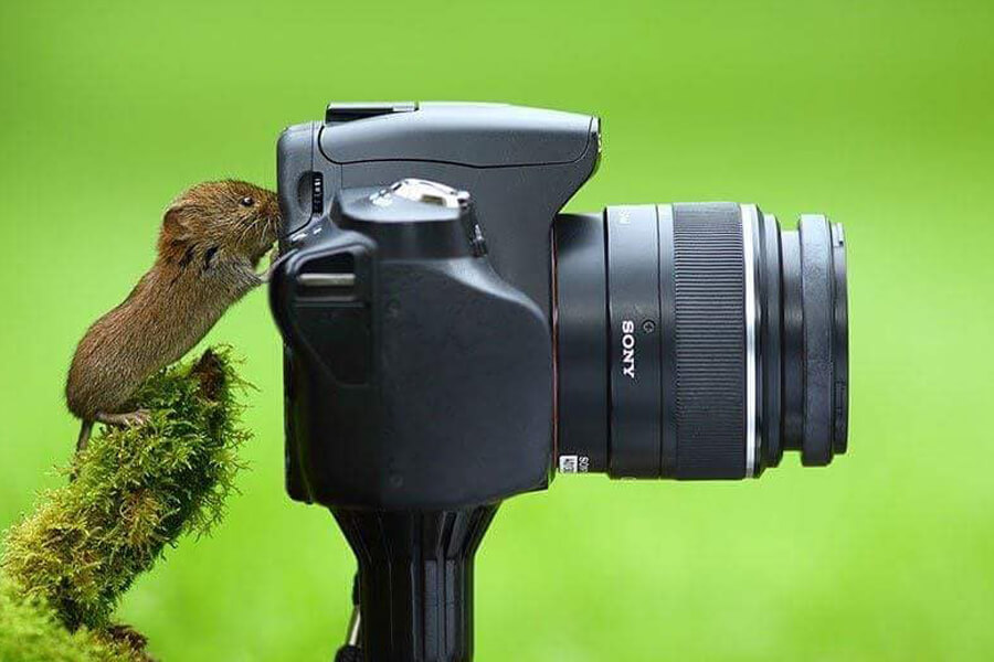 mouse is photographer