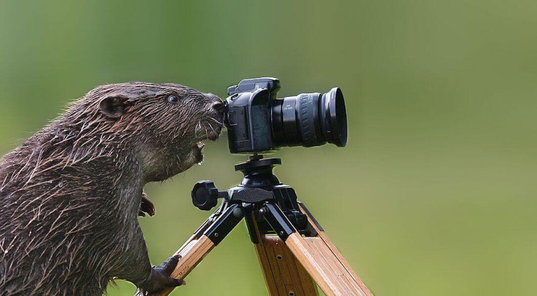 animals with camera