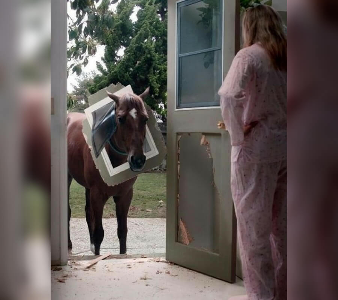 horse-horse-32969-19940.jpg