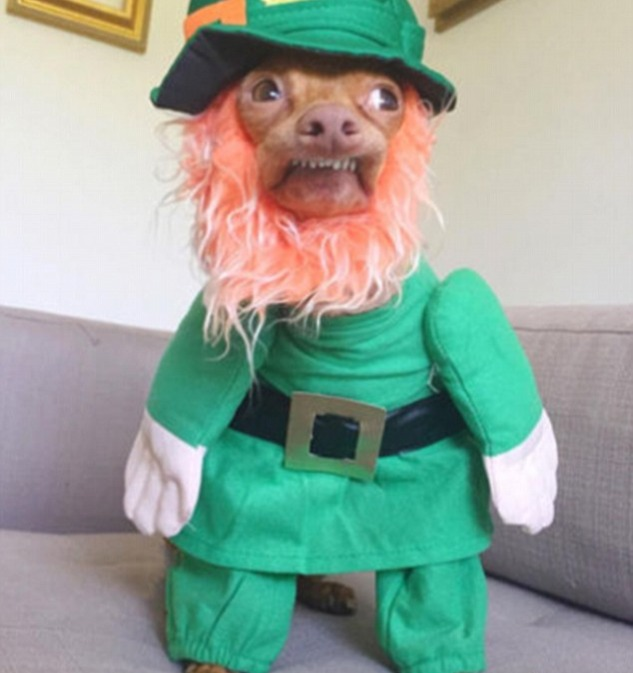 3E5C55F000000578-0-People_have_been_sharing_their_worst_St_Patrick_s_Day_fails_onli-a-11_1489744700076