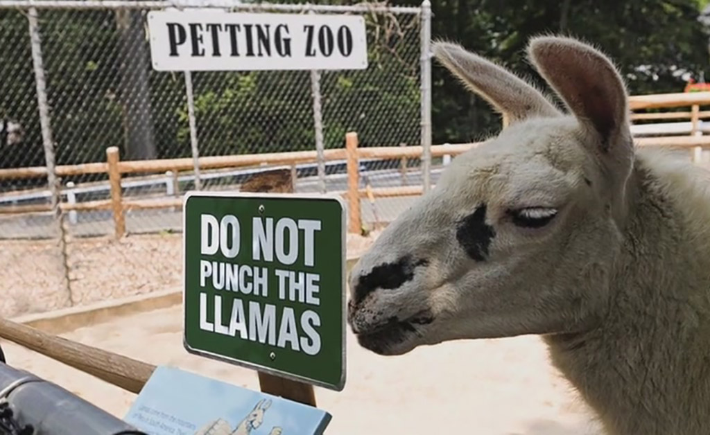 Not The Llamas
