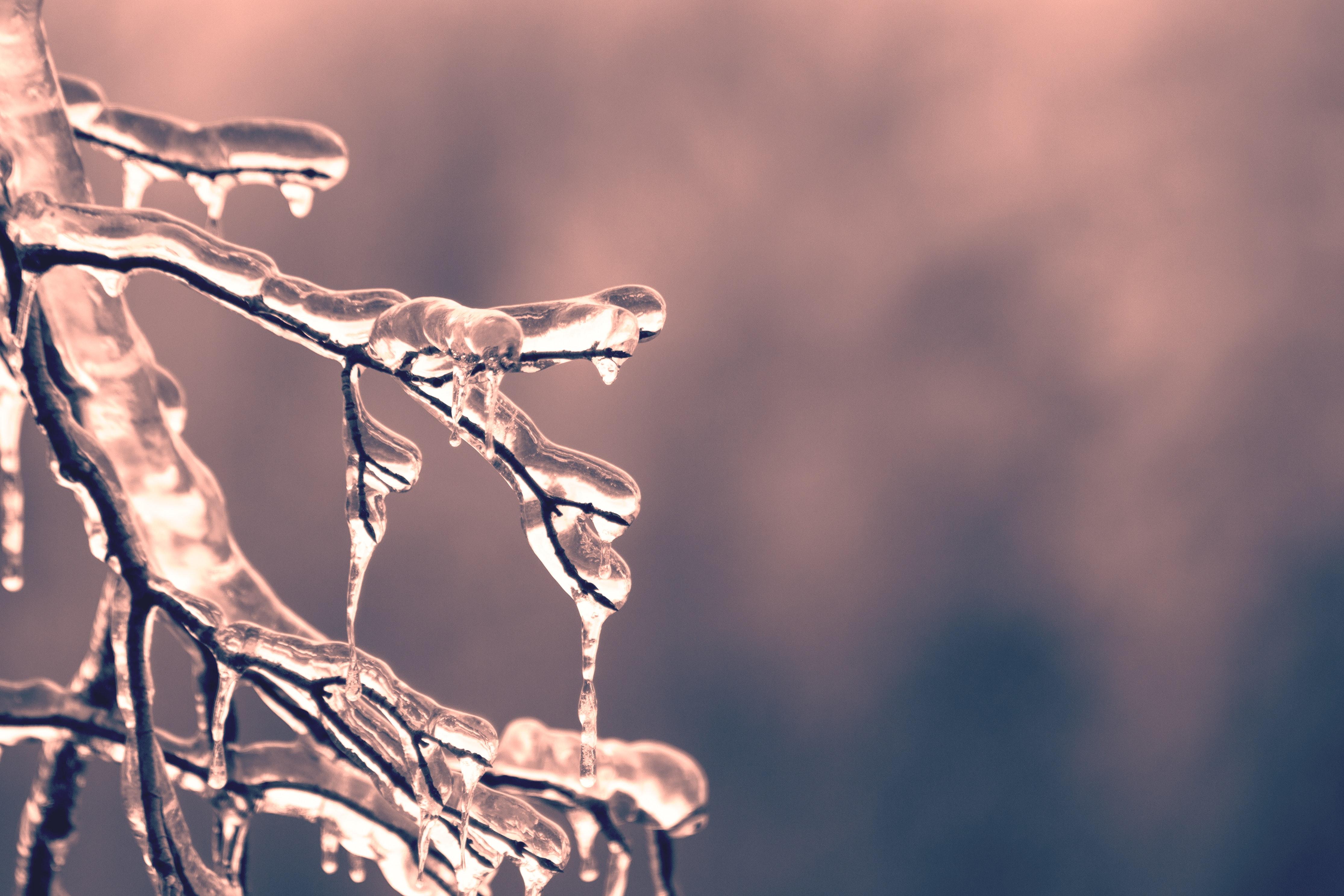 blur-branch-close-up-436792