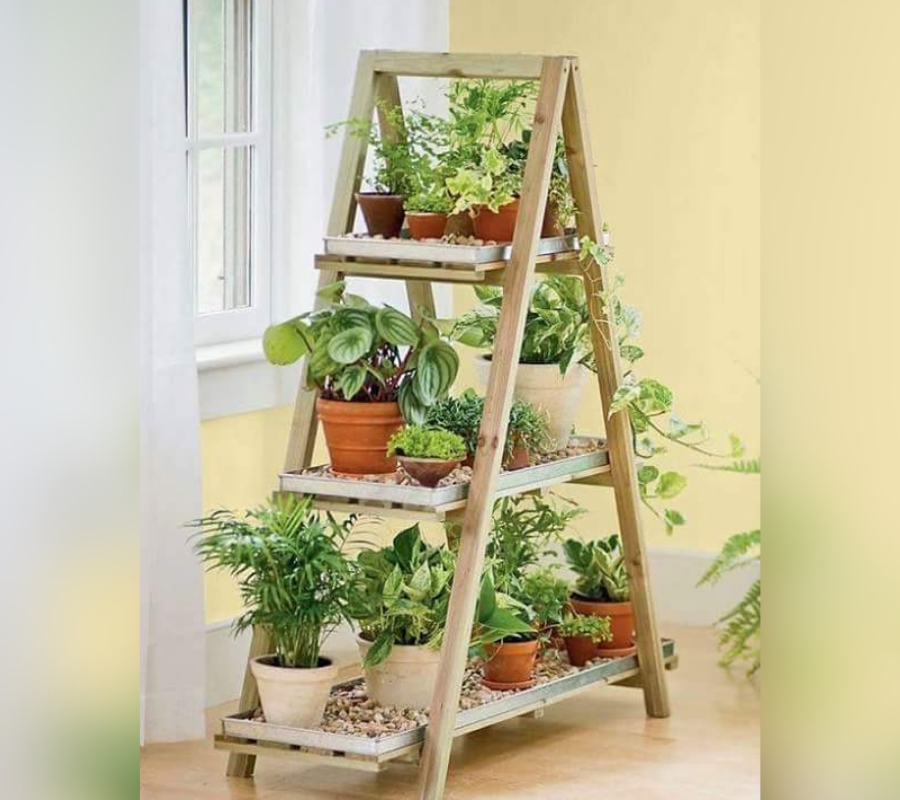 ladder plants