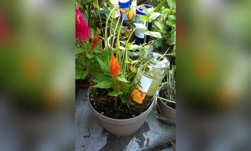 wine-bottle-plant-waterer
