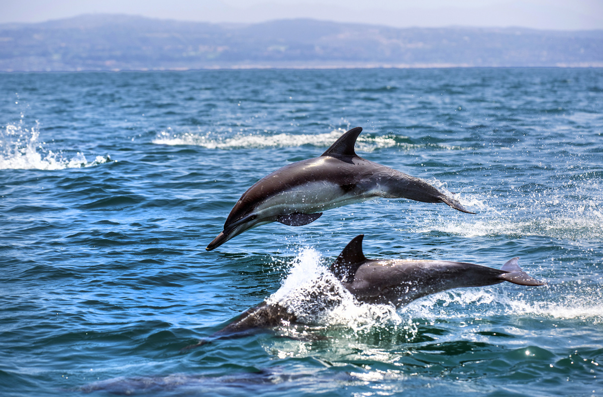 Looking for a Southern California eco-tour? 2 different ways to see dolphins, whales and other ocean creatures