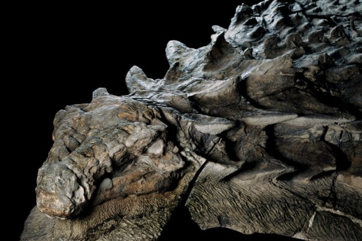 13dinosaur-superJumbo-e1552582116107