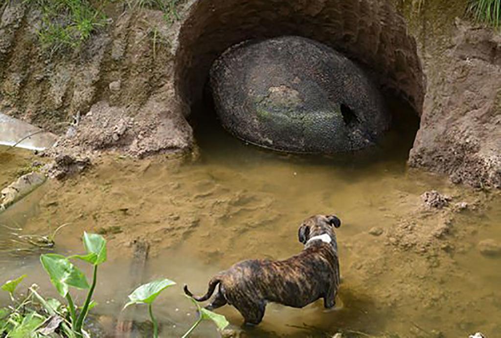 Dog Sensed Something