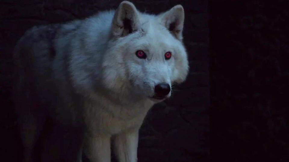 ghost the direwolf where is he