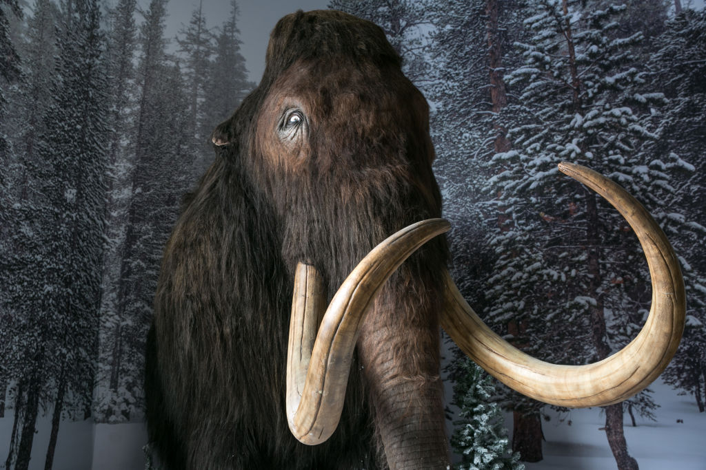 What About The Mammoth