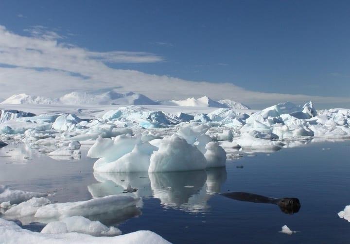 antarcitca