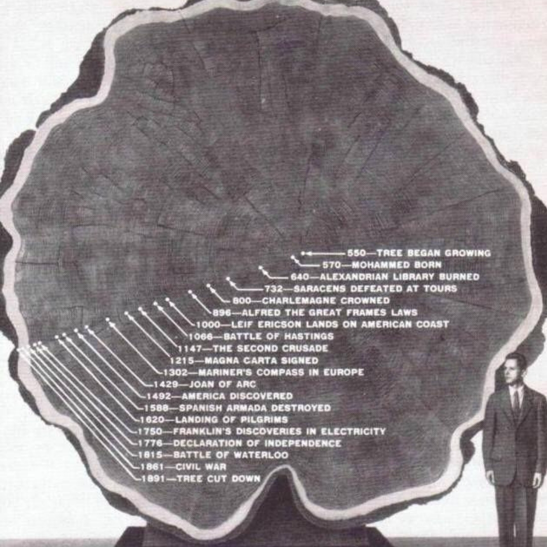 mark twain tree cut in half