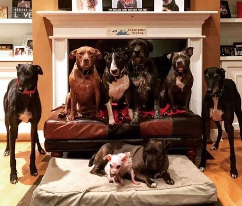 dog-fireplace-768w-39333
