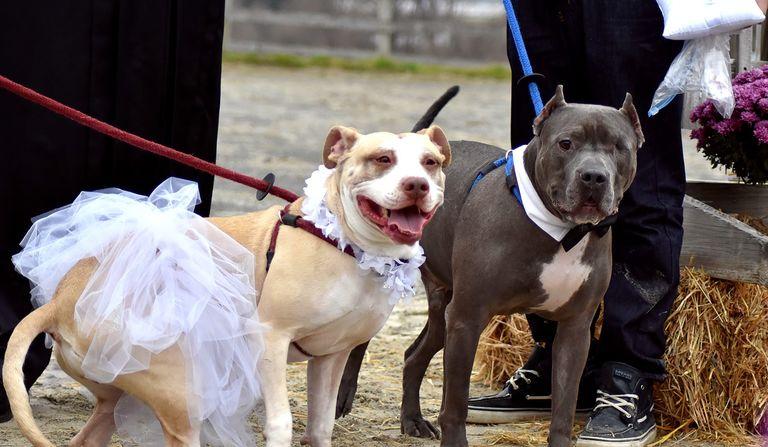 dog-wedding-768w-49773