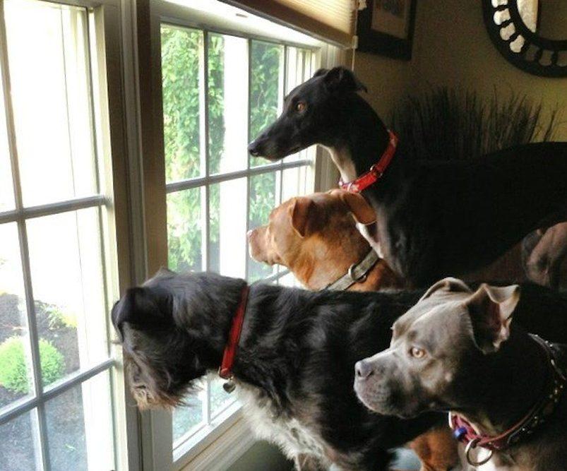dog-window.v1-e1551738314962-67544