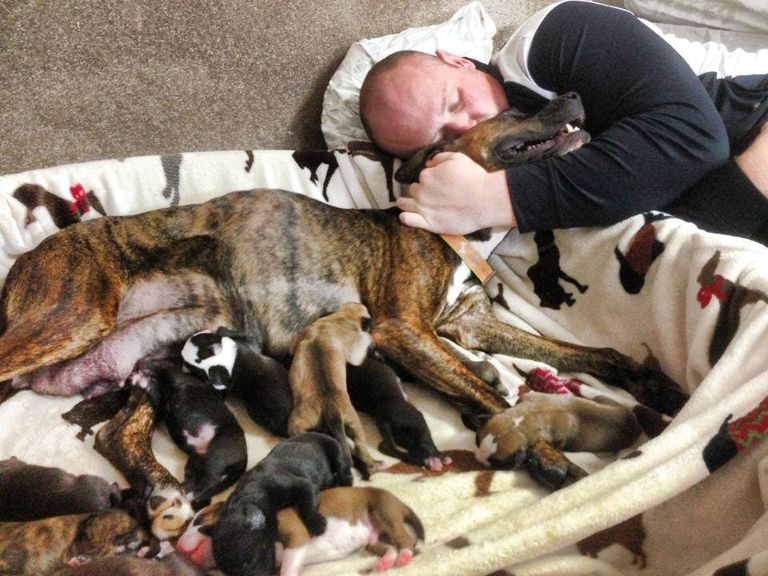 puppies-everywhere-768w-73959