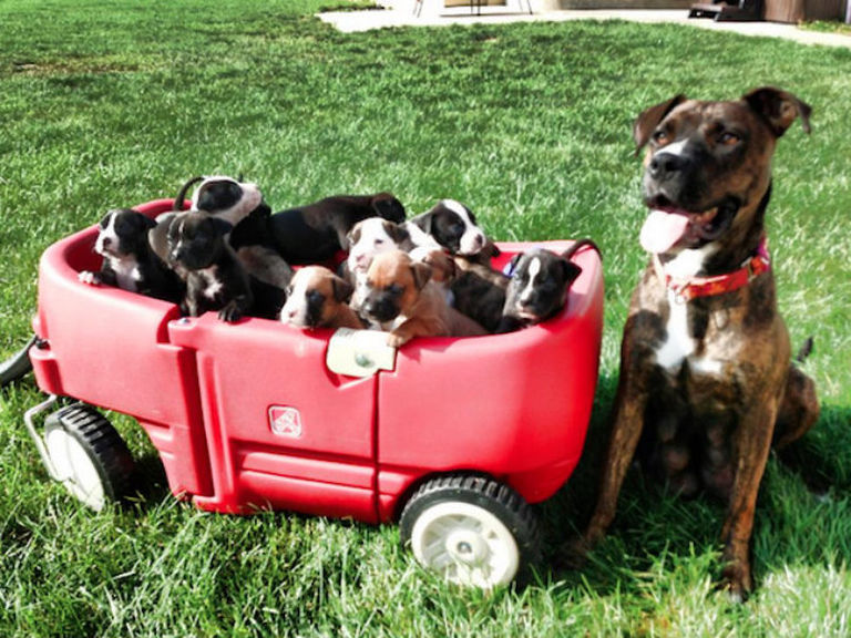 puppy-wagon.v1-768w-47024