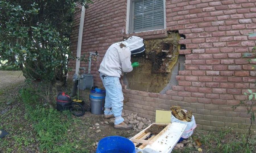Bees-on-Davids-Shoulder-e1538676413235-768x458-37616