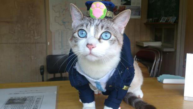 Lemon police officer kitty Kyoto