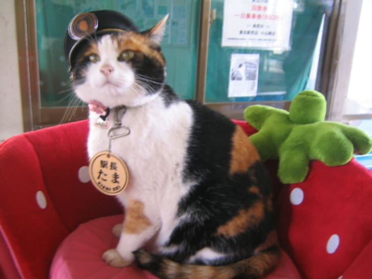 Tama operating office train cat