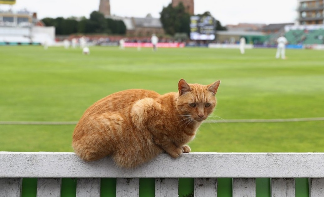 brian somerset cricket player cat