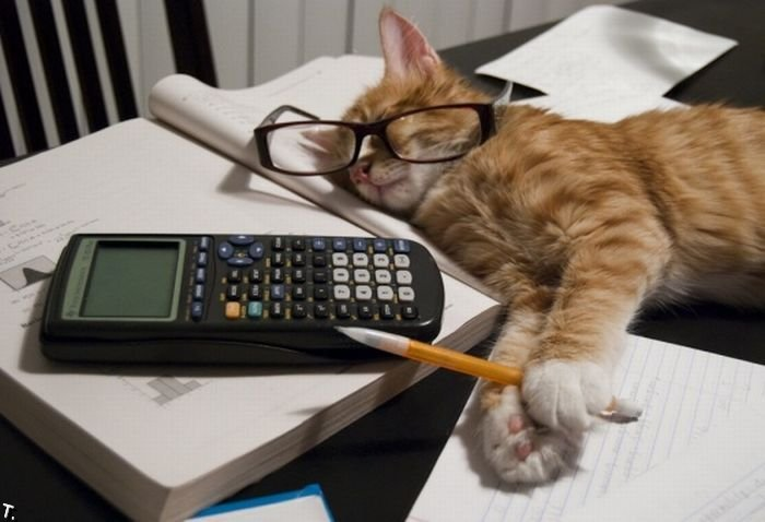 calculator cat mitzy