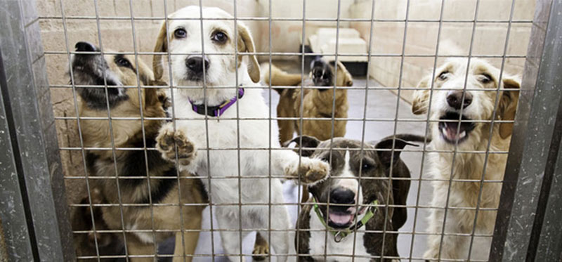 dogs-dogs-13489-61558