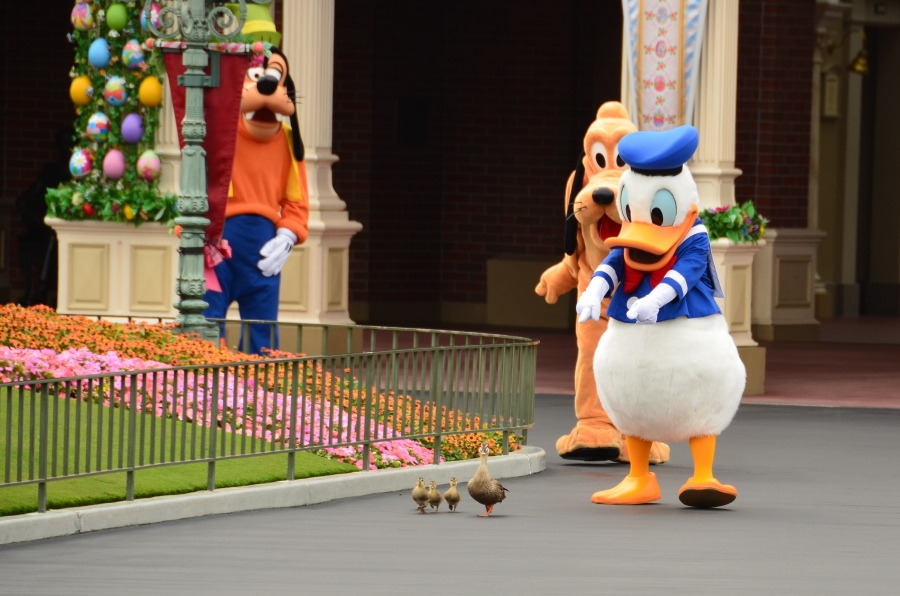 donald-duck-with-ducks