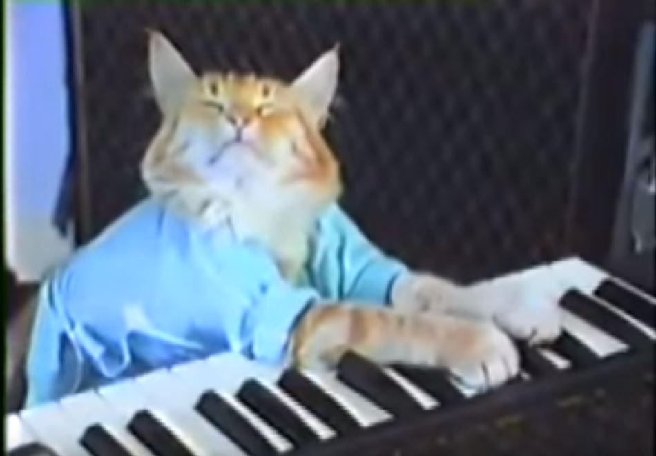 keyboard cat fatso