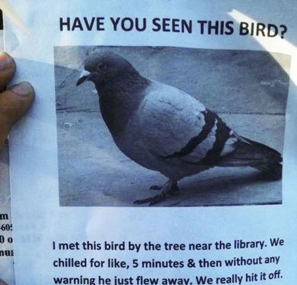 crazy guy misses bird sign