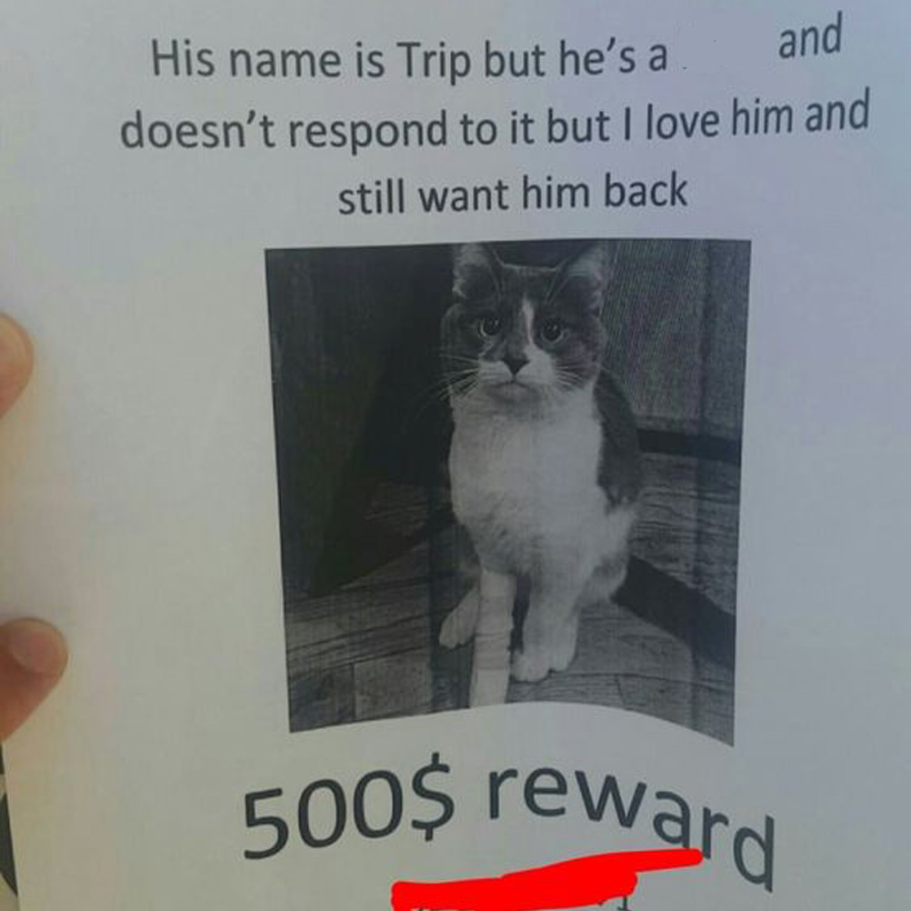 lost cat that doesn't respond