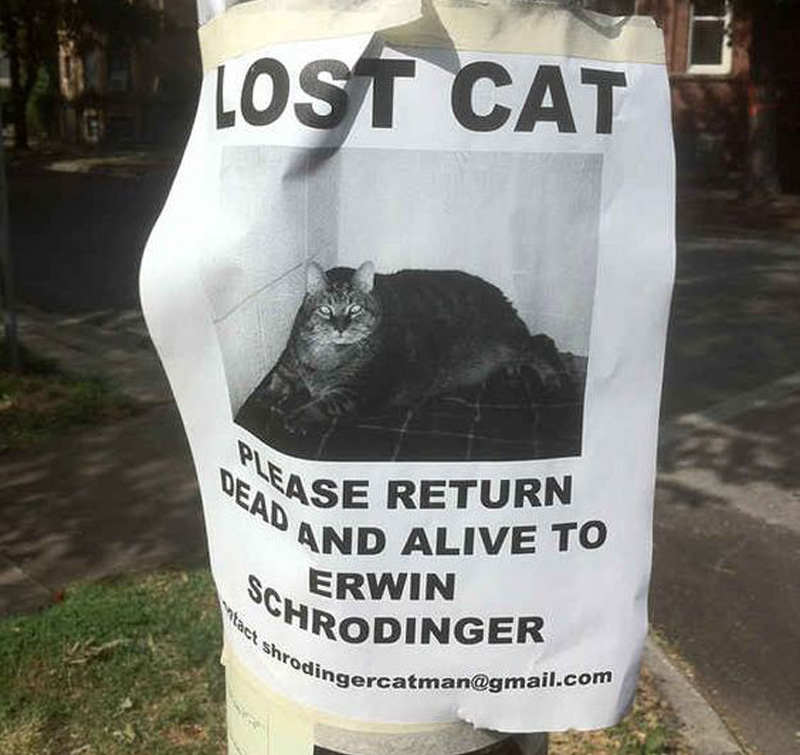 return the cat dead and alive