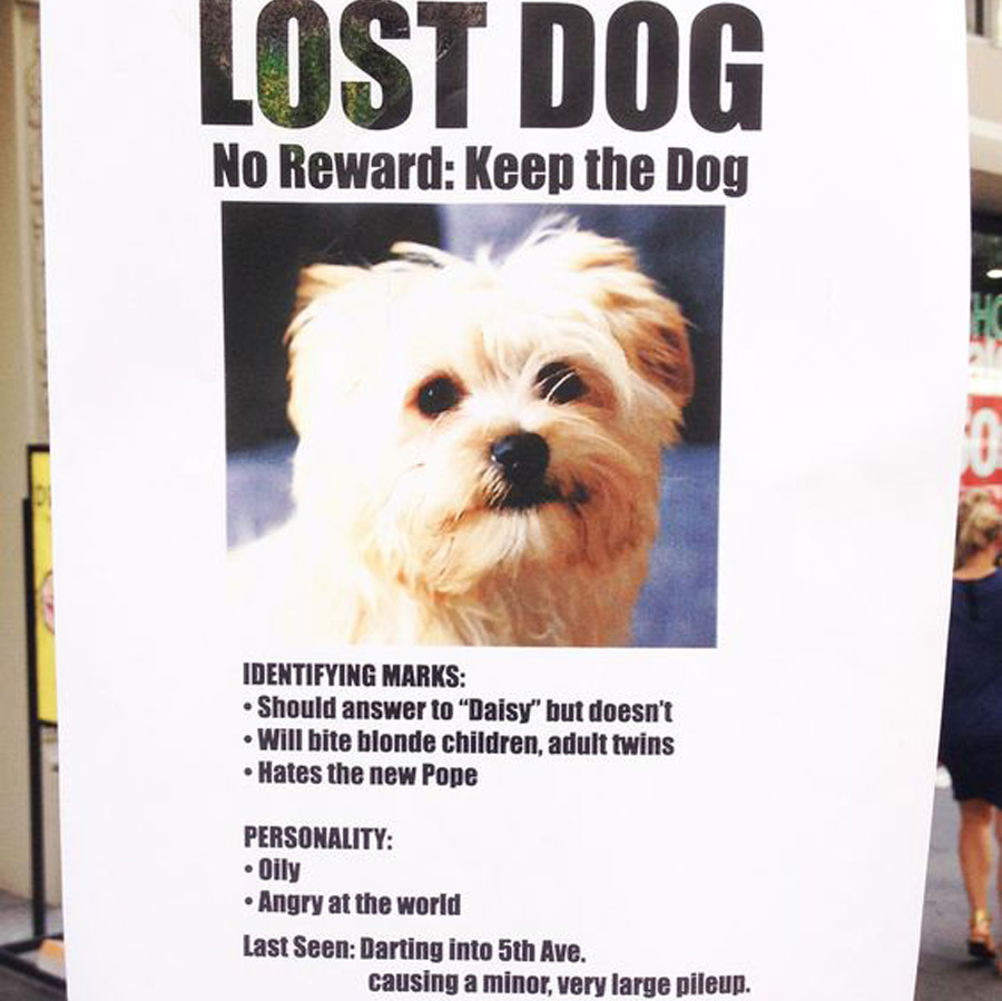 lost bad dog that the owner doesn't want anymore