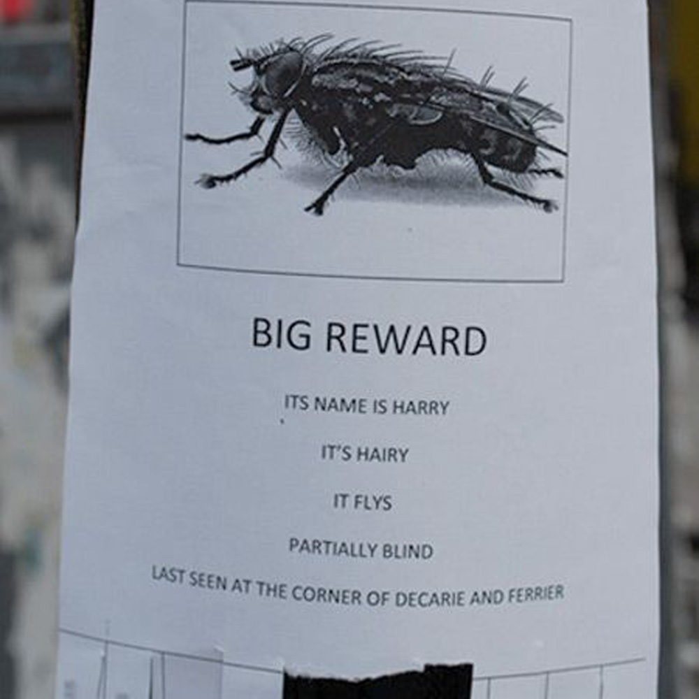 pet fly lost and owner wants it back