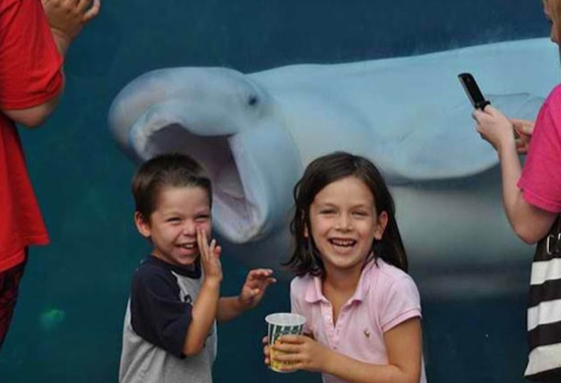 Beluga Whale and two kids
