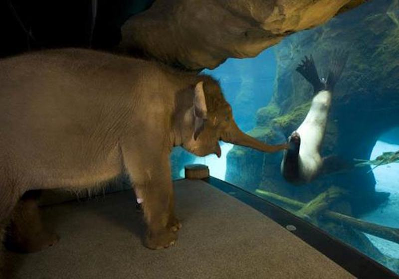 Elephants at the Aquarium