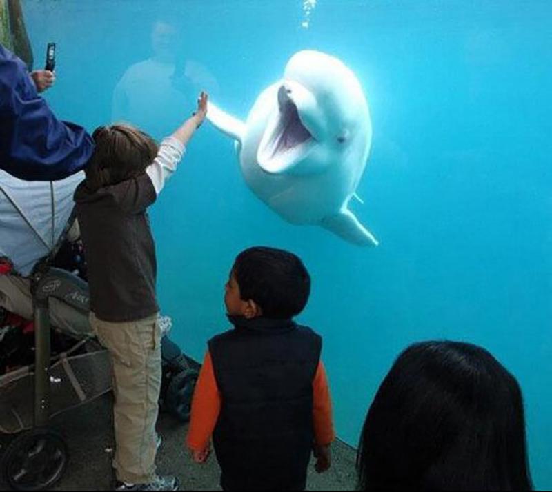 Funny-Dolphin-at-an-Aquarium-12421
