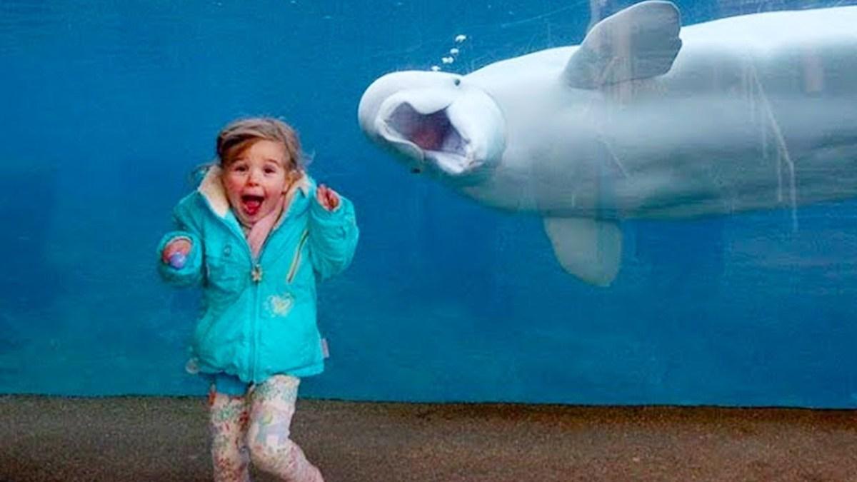 Hilarious Kid at Aquarium