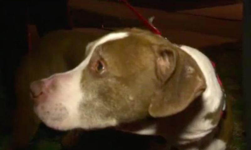 Ikea's lonley dog, Zimba