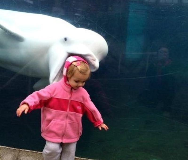 Nom at the aquarium