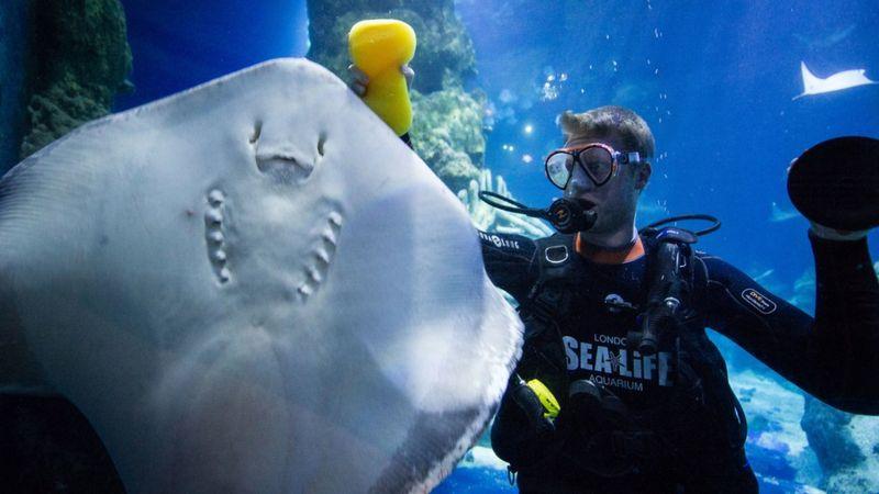 Sea life London Aquarium photobomb