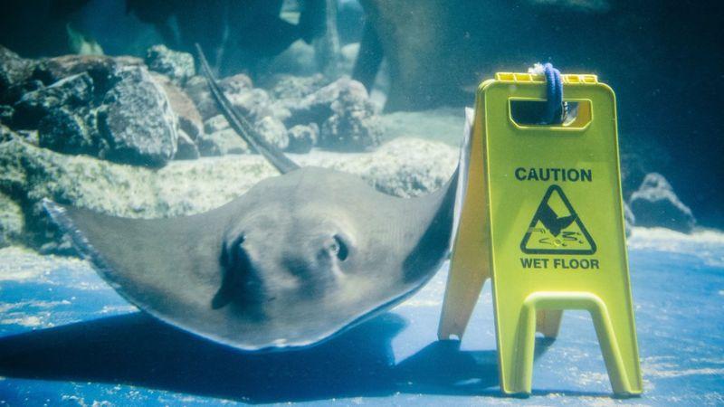 Wet Floor in the Aquarium Tank