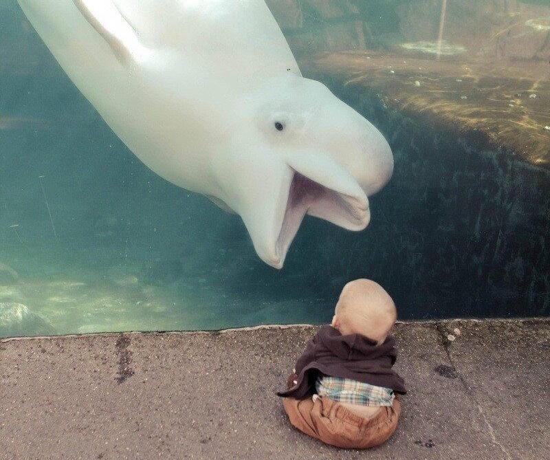 baby fun at the aquarium - hilarious photo