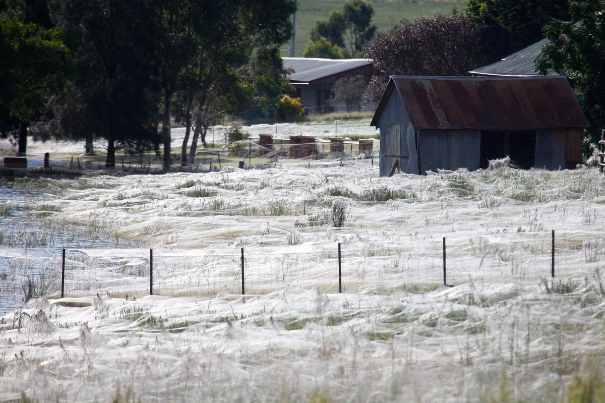 spider web covered fields near a ranch in New Zealand