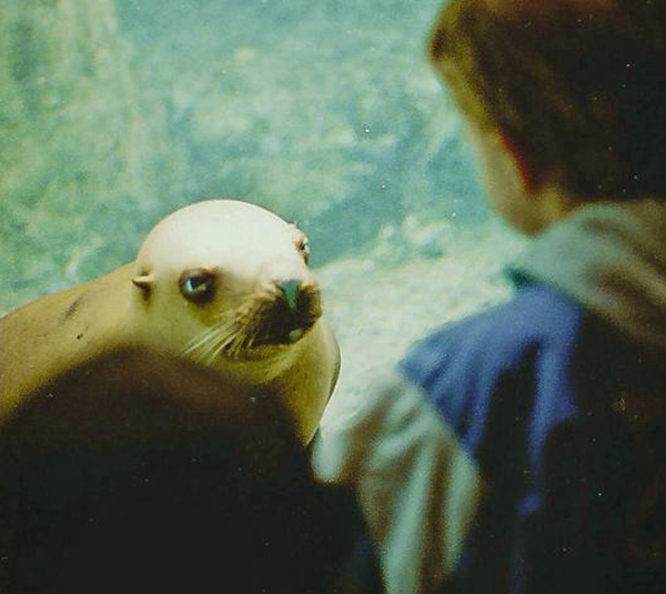 Seal with plans